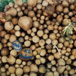 Holland Houtland: laat bouwers bouwen en boeren boeren